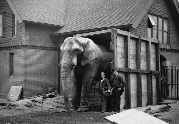 Elephant Self Storage, Elephant of the month, Jumbo