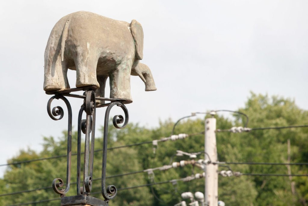 Elephant Self Storage, Elephant of the month, Old Bet