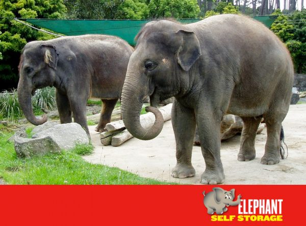 Elephant Self Storage, Elephant of the Month, Kashin