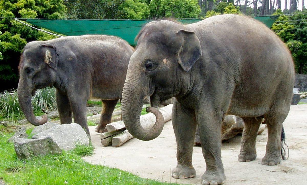 Elephant Self Storage, Elephant of the Month, Kashin