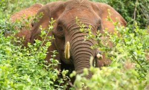 Elephant Self Storage