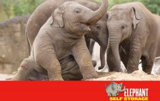 Elephant Self Storage, Elephant of the Month, Samiya