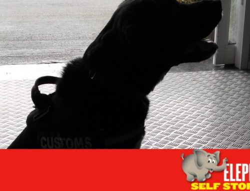 Sniffer Dogs To Create Safe Self Storage